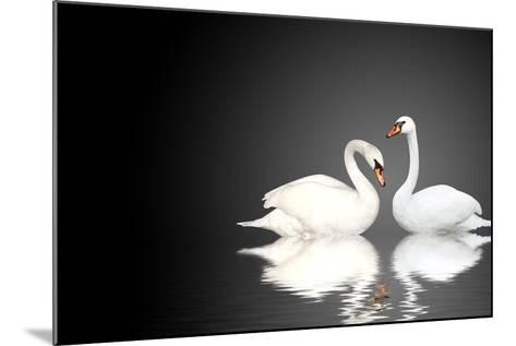 Two White Swans On Black Background-frenta-Mounted Art Print