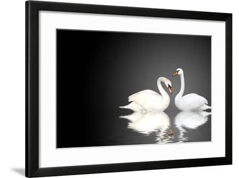 Two White Swans On Black Background-frenta-Framed Art Print
