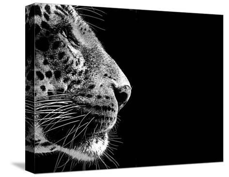 Isolated Leopard Face Card-Snap2Art-Stretched Canvas Print