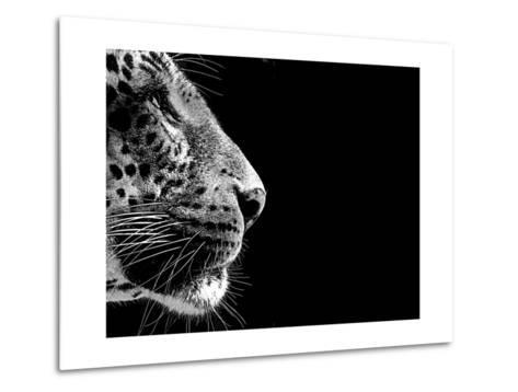 Isolated Leopard Face Card-Snap2Art-Metal Print