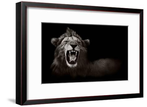 Lion Displaying Dangerous Teeth-Donvanstaden-Framed Art Print