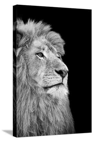Black And White Isolated Lion Face-Snap2Art-Stretched Canvas Print