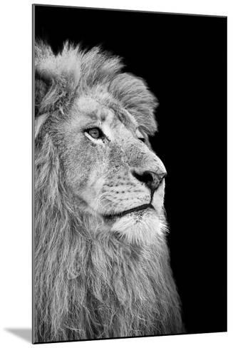 Black And White Isolated Lion Face-Snap2Art-Mounted Art Print