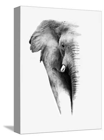Artistic Black And White Elephant-Donvanstaden-Stretched Canvas Print