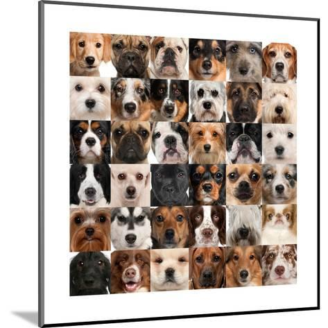 Collage Of 36 Dog Heads-Life on White-Mounted Art Print
