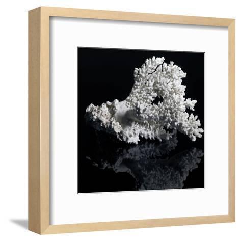 White Coral-prill-Framed Art Print