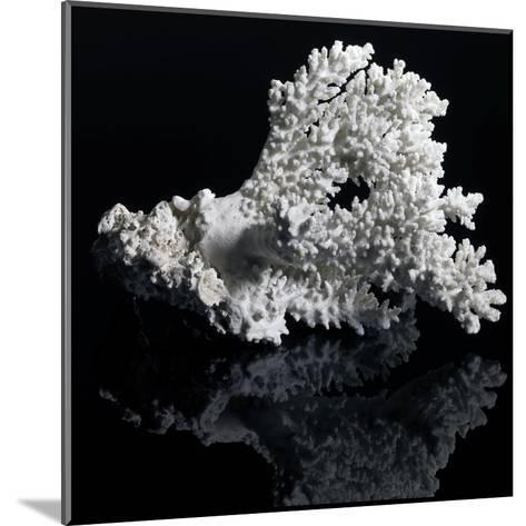 White Coral-prill-Mounted Art Print