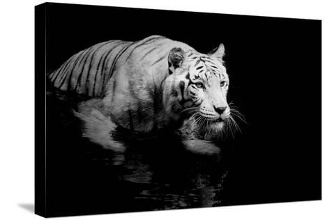 White Tiger-Kjersti-Stretched Canvas Print