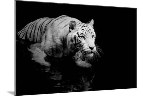 White Tiger-Kjersti-Mounted Art Print