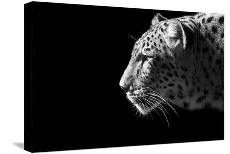 Leopard Portrait-Reddogs-Stretched Canvas Print