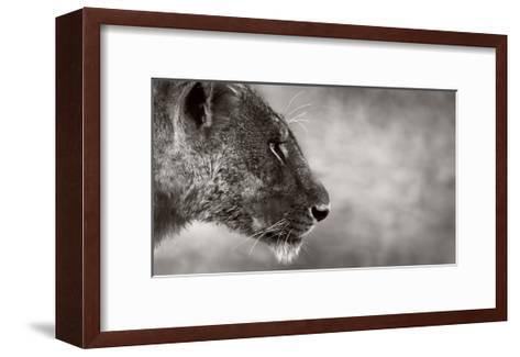 Lion Side View-Donvanstaden-Framed Art Print