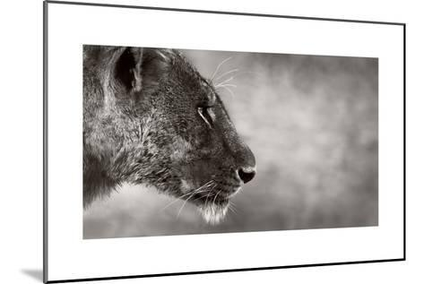 Lion Side View-Donvanstaden-Mounted Art Print