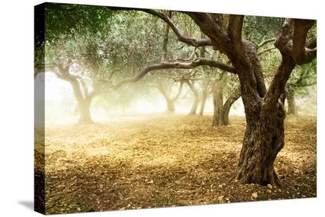 Olive Trees-Subbotina Anna-Stretched Canvas Print