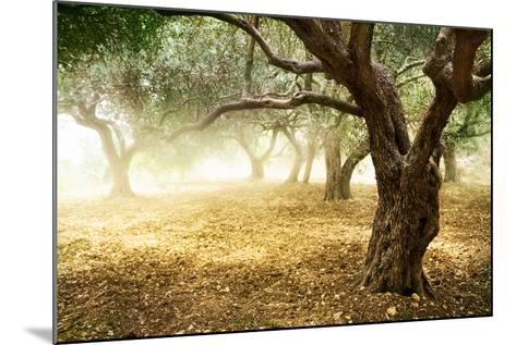 Olive Trees-Subbotina Anna-Mounted Art Print