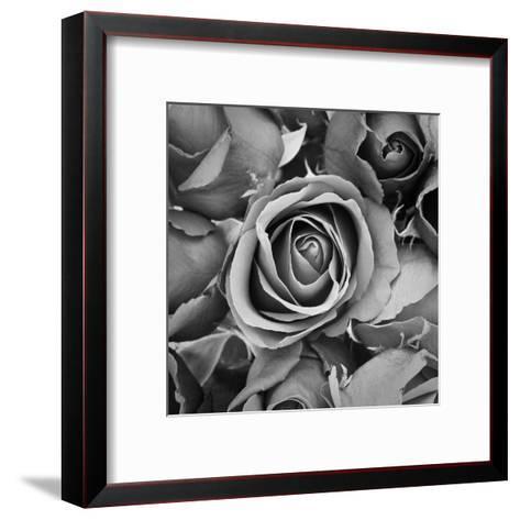 Sorrow Rose-zirconicusso-Framed Art Print