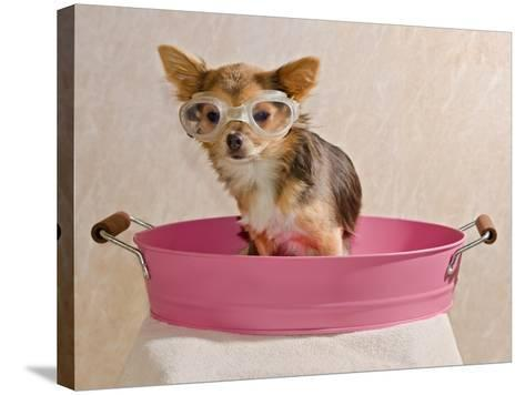 Chihuahua Puppy Taking A Bath Wearing Goggles Sitting In Pink Bathtub-vitalytitov-Stretched Canvas Print