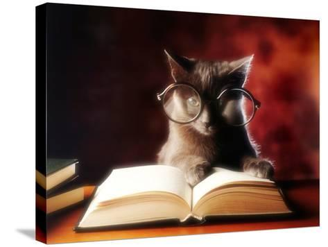 Gray Cat With Glasses Reading A Book-gila-Stretched Canvas Print