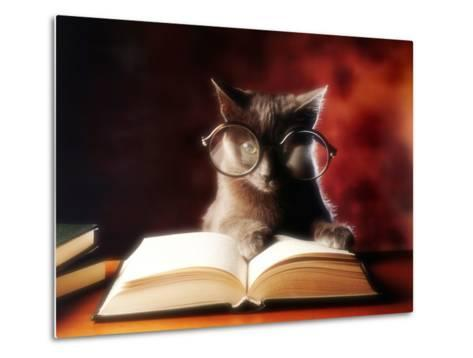Gray Cat With Glasses Reading A Book-gila-Metal Print