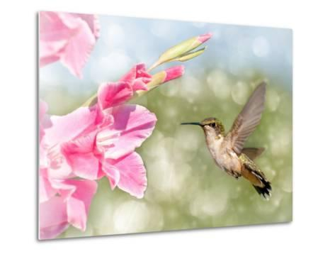 Dreamy Image Of A Ruby-Throated Hummingbird Hovering Next To A Pink Gladiolus Flower-Sari ONeal-Metal Print