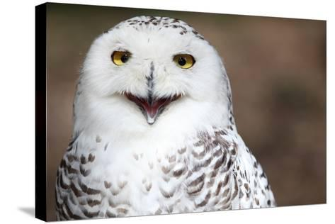 Snowy Owl (Bubo Scandiacus) Smiling And Laughing-l i g h t p o e t-Stretched Canvas Print