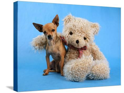 A Teddy Bear With His Arm Around A Tiny Chihuahua-graphicphoto-Stretched Canvas Print