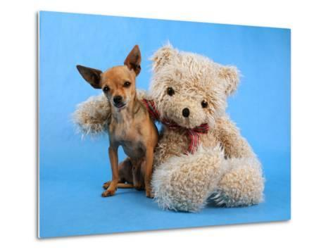 A Teddy Bear With His Arm Around A Tiny Chihuahua-graphicphoto-Metal Print