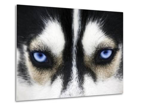 Close Up On Blue Eyes Of A Dog-melis-Metal Print