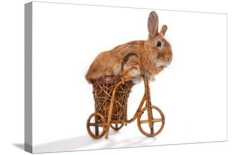 Photo Of Cute Brown Rabbit Riding Bike Isolated On White-PH.OK-Stretched Canvas Print