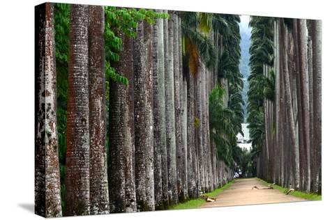 The Palm Alley In The Botanical Garden In Rio De Janeiro-xura-Stretched Canvas Print