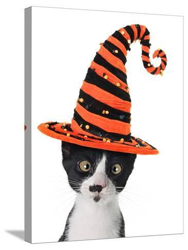 Cross Eyed Kitten Wearing A Halloween Witch Hat-Hannamariah-Stretched Canvas Print