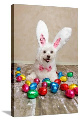 Easter Bunny Dog With Chocolate Easter Eggs-lovleah-Stretched Canvas Print