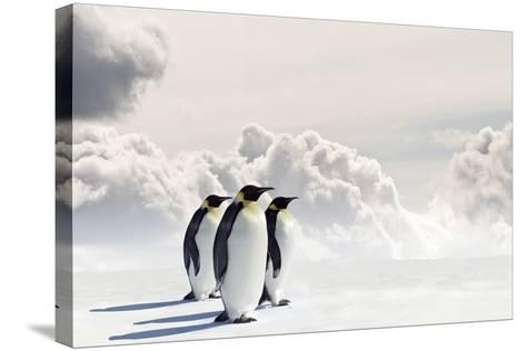 Emperor Penguins In Antarctica-Jan Martin Will-Stretched Canvas Print