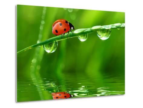 Fresh Morning Dew And Ladybird-volrab vaclav-Metal Print