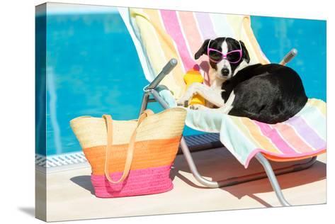 Funny Dog Sunbathing On Summer-Dirima-Stretched Canvas Print