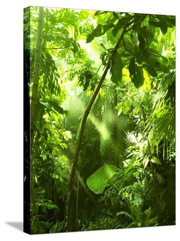 Tropical Forest, Trees In Sunlight And Rain-odmeyer-Stretched Canvas Print
