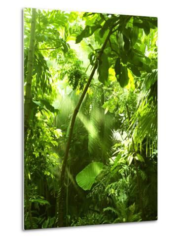 Tropical Forest, Trees In Sunlight And Rain-odmeyer-Metal Print