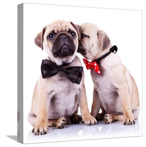Lady Mops Puppy Whispering Something Or Kissing Its Gentleman Partner While Seated-Viorel Sima-Stretched Canvas Print