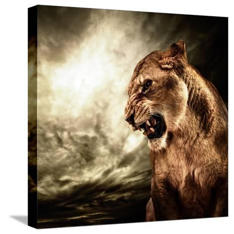 Roaring Lioness Against Stormy Sky-NejroN Photo-Stretched Canvas Print