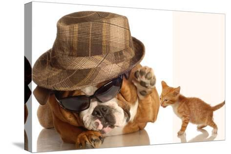 Bulldog Gangster With Kitten-Willee Cole-Stretched Canvas Print