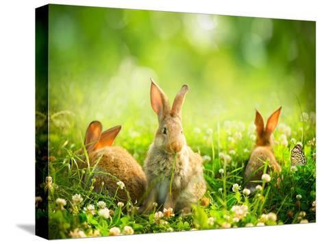 Rabbits-Subbotina Anna-Stretched Canvas Print