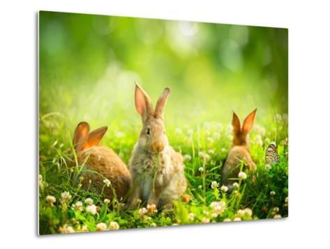 Rabbits-Subbotina Anna-Metal Print