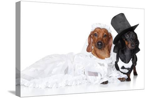 Fashionable Dachshund Dog Wedding-Jagodka-Stretched Canvas Print