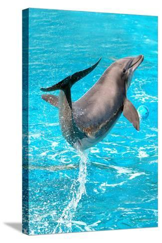 Dolphin Plays In Pool-Michal Bednarek-Stretched Canvas Print