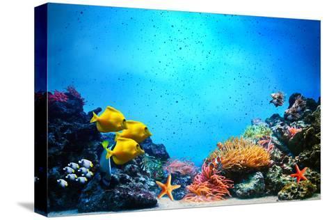 Underwater Scene-Michal Bednarek-Stretched Canvas Print