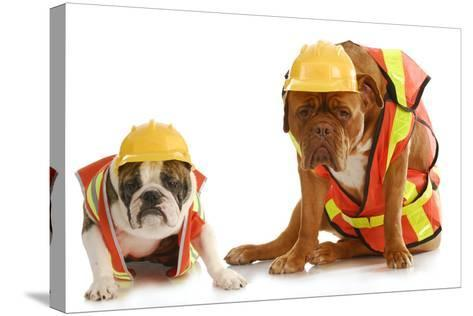 Working Dogs - English Bulldog And Dogue De Bordeaux Dressed Like Very Tire Construction Workers-Willee Cole-Stretched Canvas Print