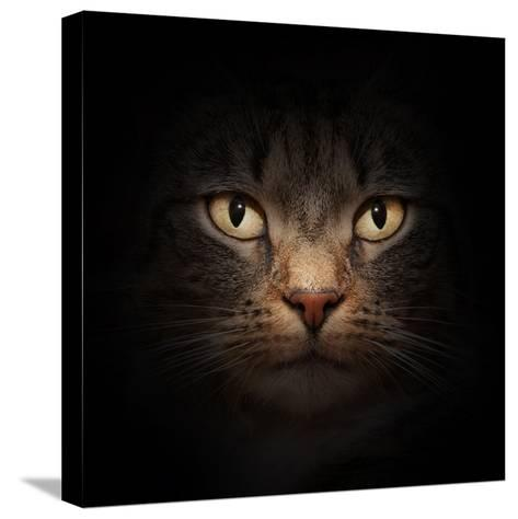 Cat Face With Beautiful Eyes Close Up Portrait-Michal Bednarek-Stretched Canvas Print