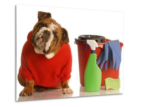 Bulldog In Red Sweater With Cleaning Supplies-Willee Cole-Metal Print