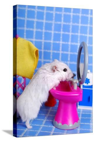 Hamster In The Bathroom- teresaterra-Stretched Canvas Print