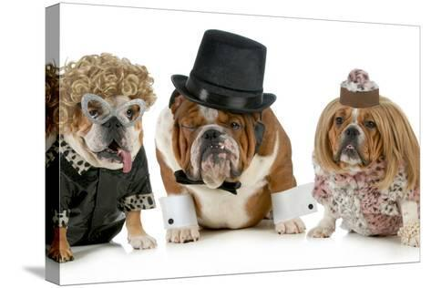 Males Bulldog With Two Females All Dressed In Formal Clothing Isolated On White Background-Willee Cole-Stretched Canvas Print
