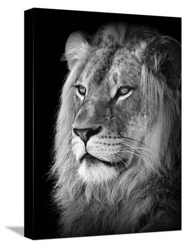 Portrait Of A Lion In Black And White-Reinhold Leitner-Stretched Canvas Print